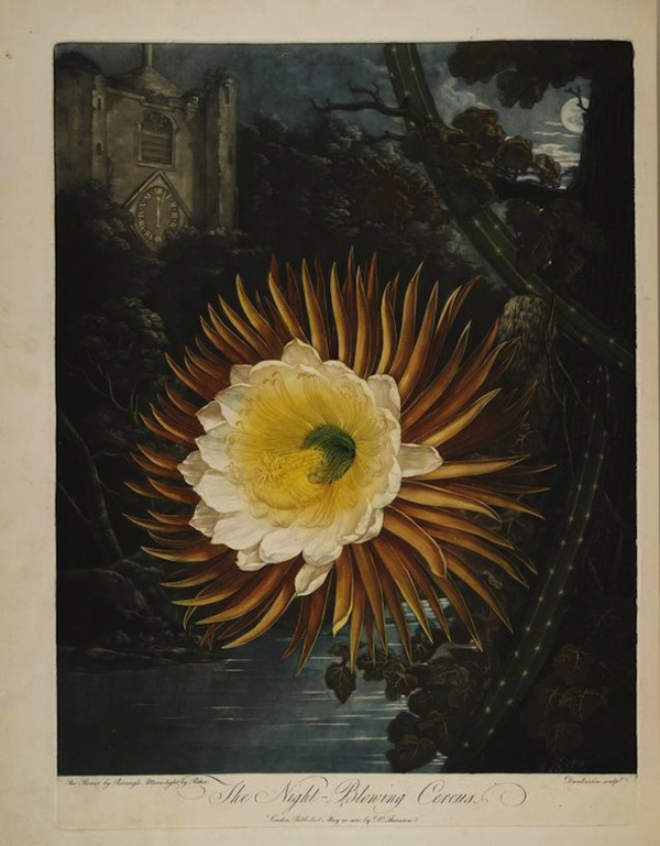 Nineteenth century paintings of a botanical specimens in a dramatic landscape