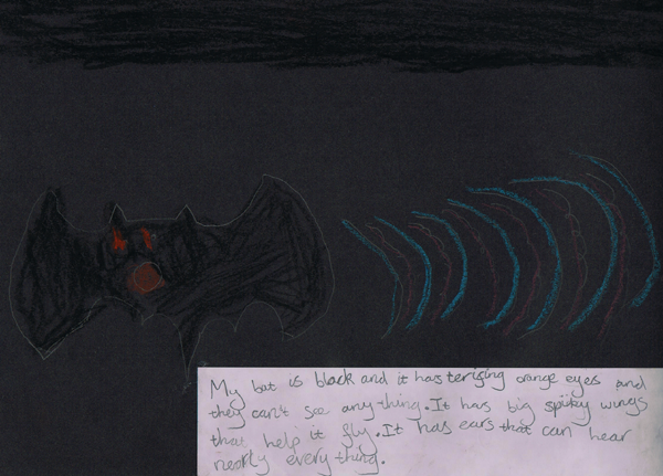 Amelia drew a bat and described the dramatic relationship between how it looked, what it could see, and what it could hear